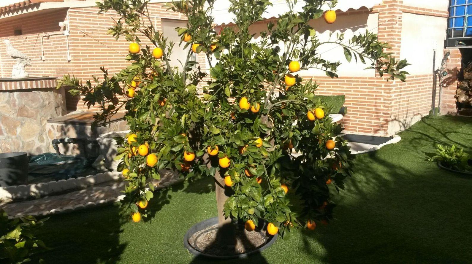 Expertos en jardinería. Servicio y profesionalidad