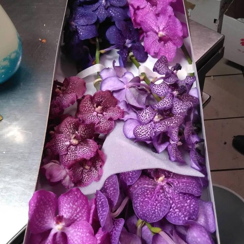 Orquídeas Vanda. Preciosas!