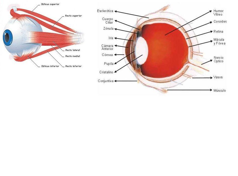 ojo 2