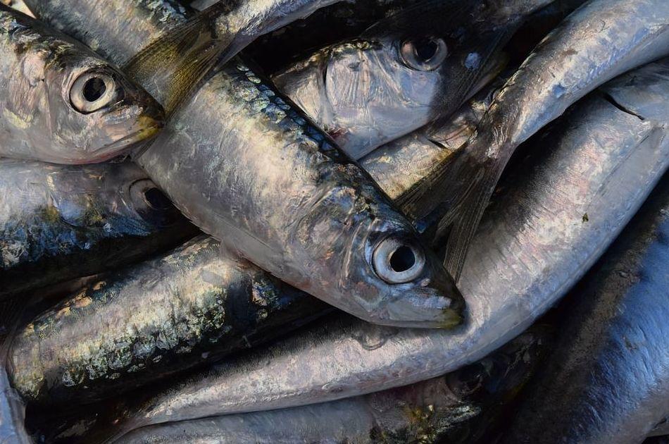 Pescados de temporada: Carta of Mandanga Hogar del Pescador