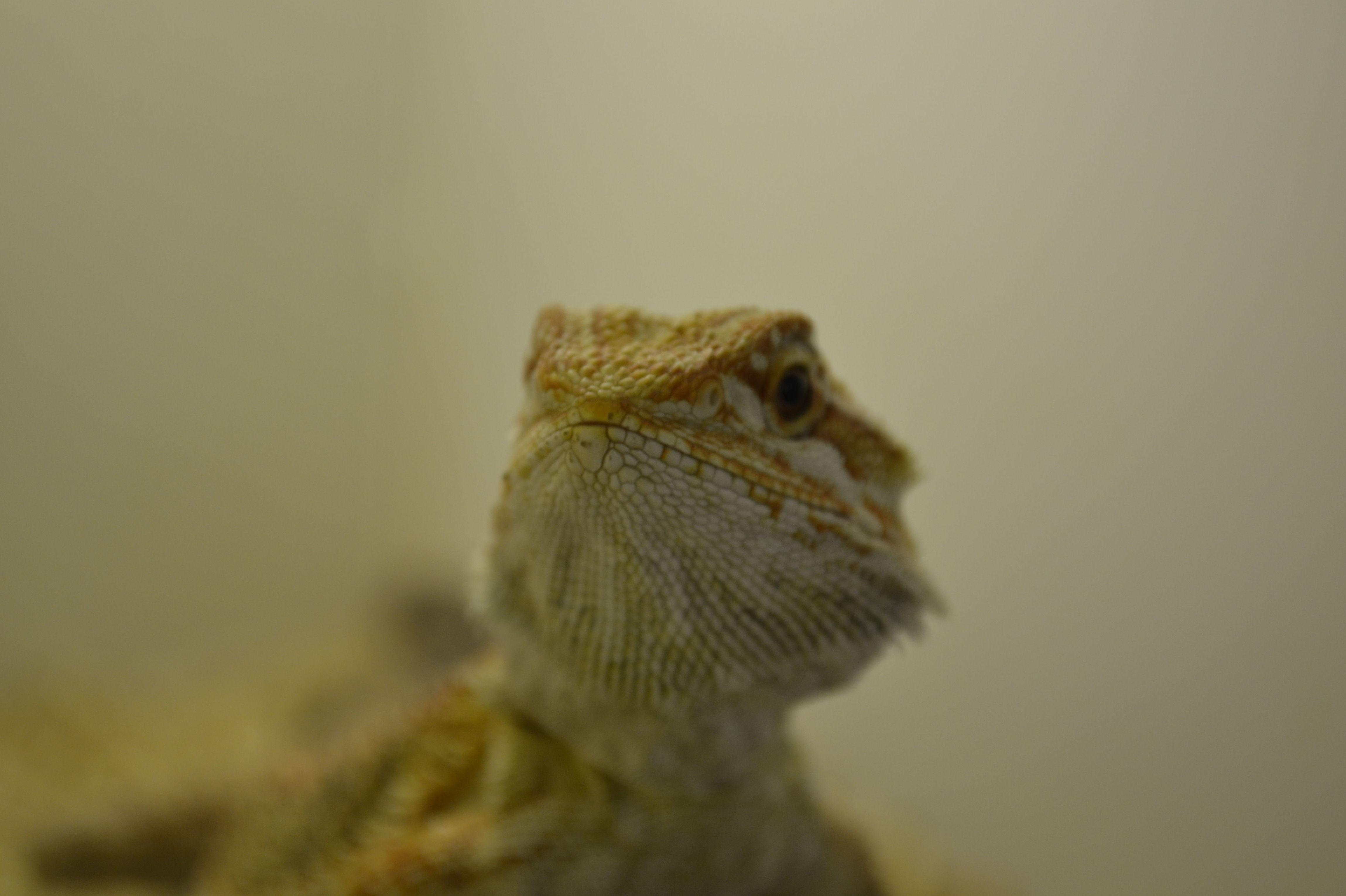 Foto 7 de Tienda de animales exóticos en Viladecans   Reptil Parc