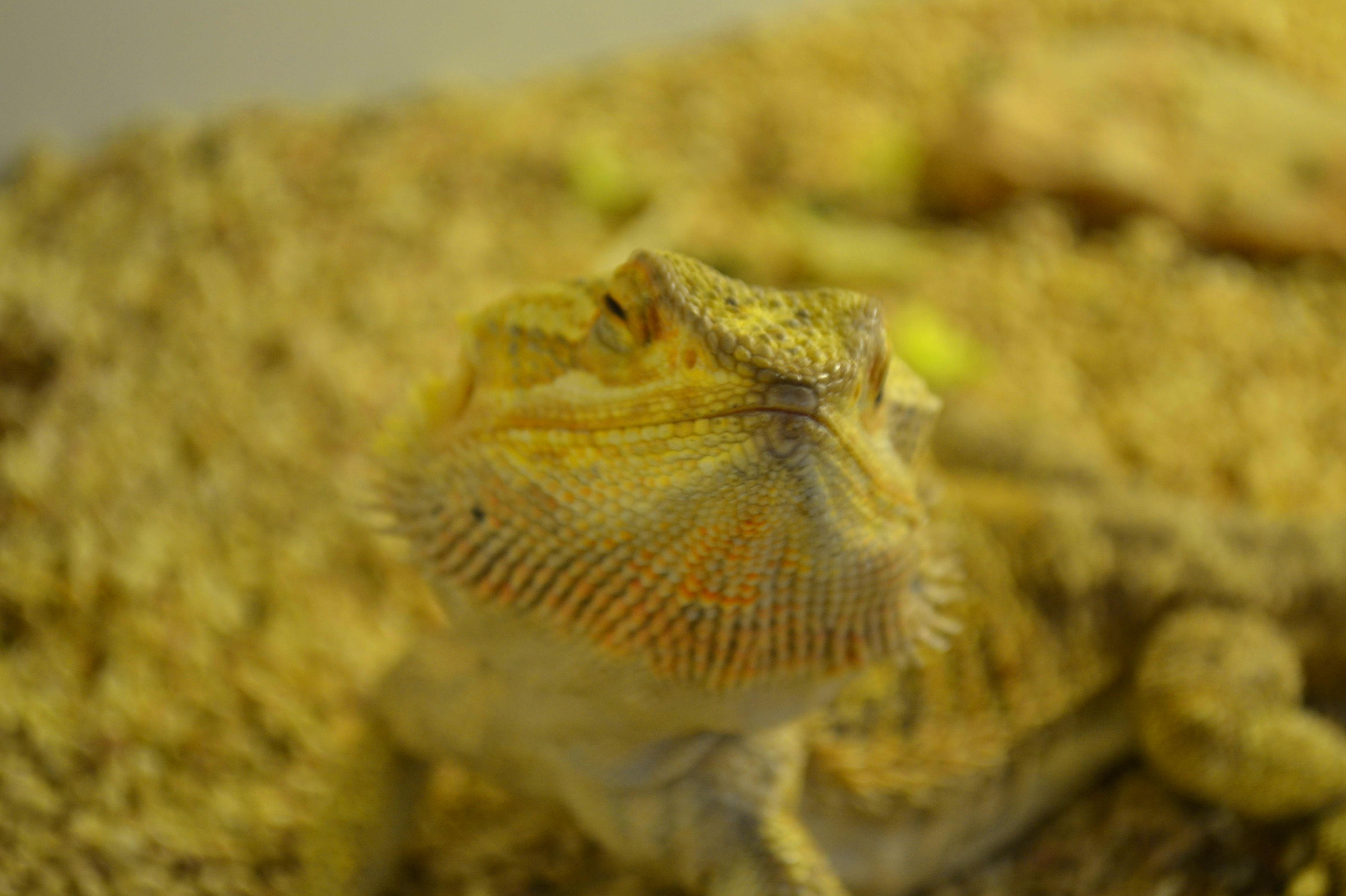 Foto 19 de Tienda de animales exóticos en Viladecans | Reptil Parc