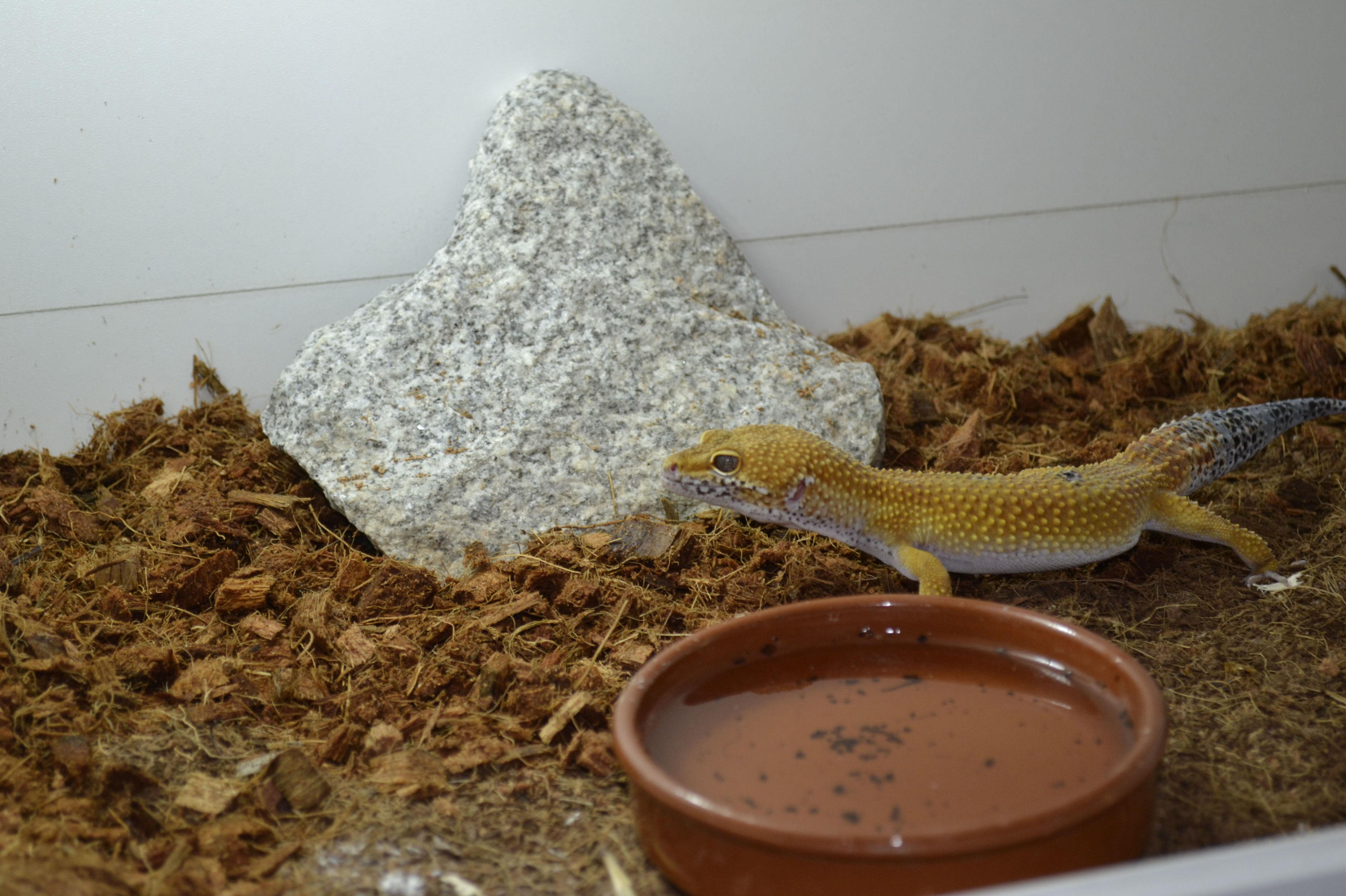 Foto 9 de Tienda de animales exóticos en Viladecans | Reptil Parc
