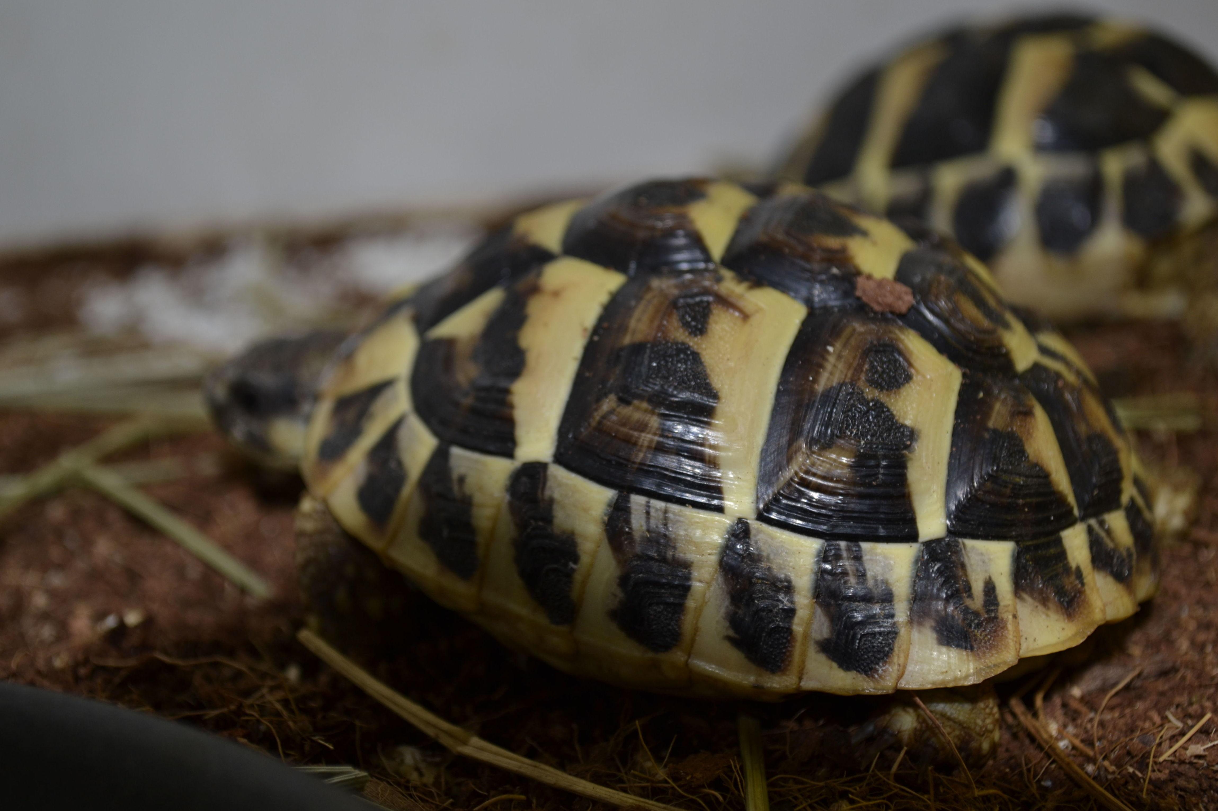 Foto 3 de Tienda de animales exóticos en Viladecans | Reptil Parc
