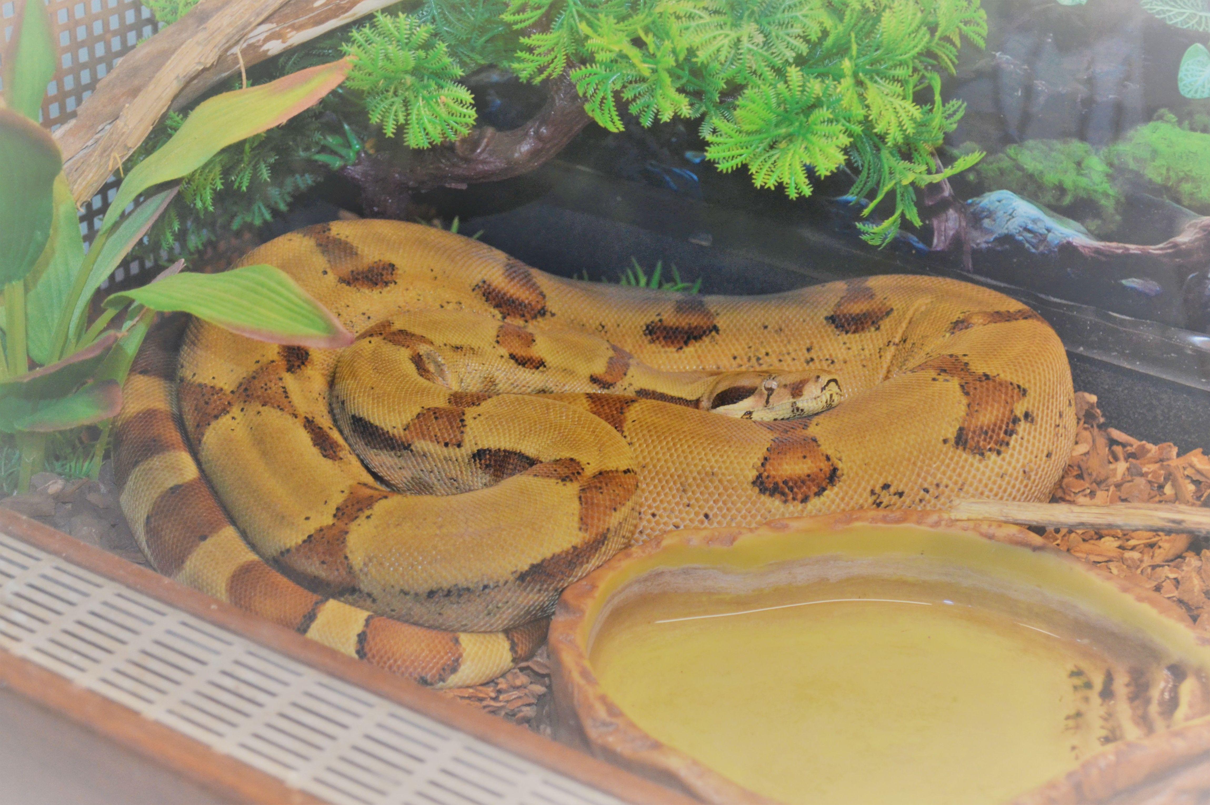 Foto 4 de Tienda de animales exóticos en Viladecans | Reptil Parc