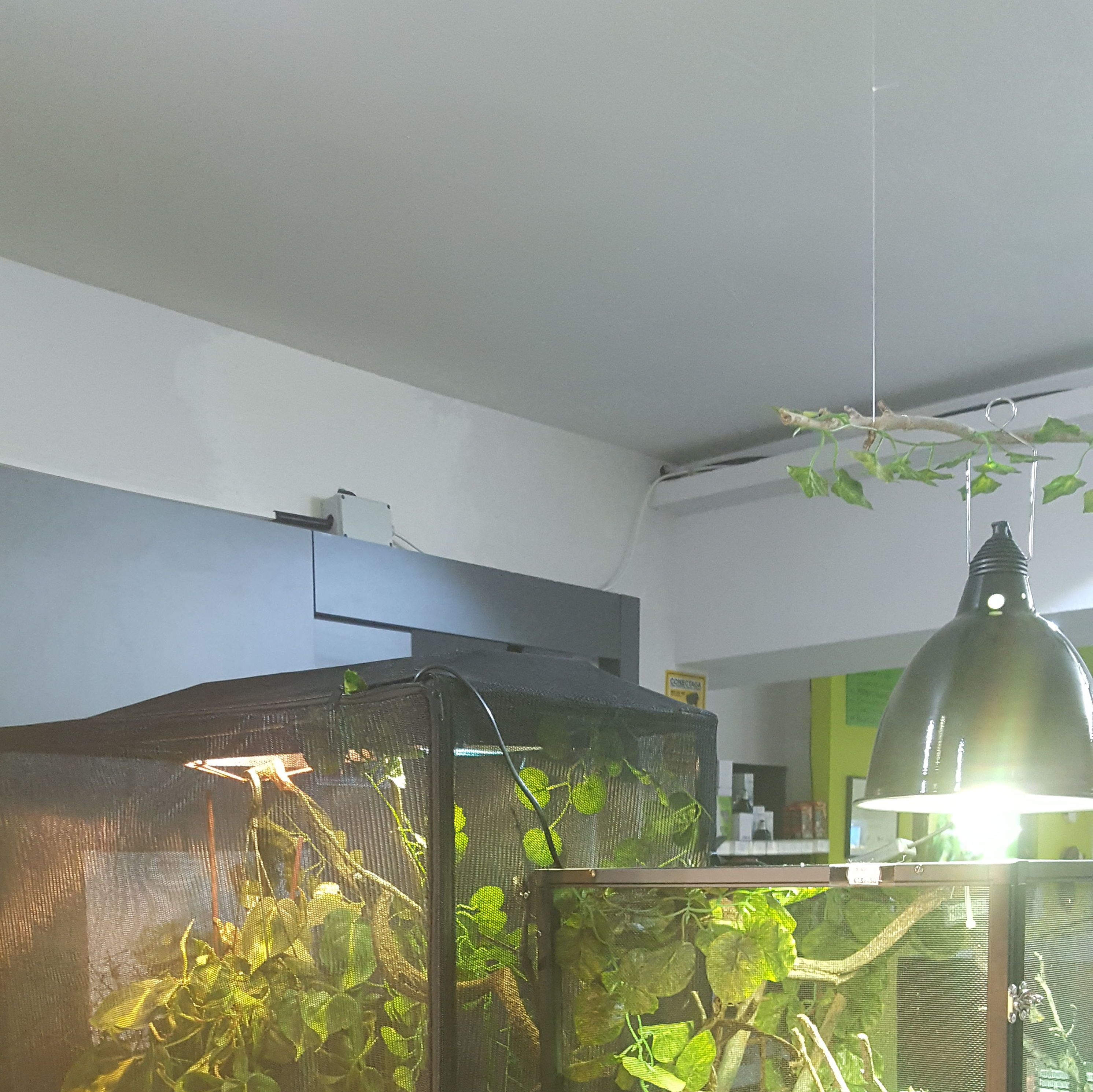 terrarios camaleónes