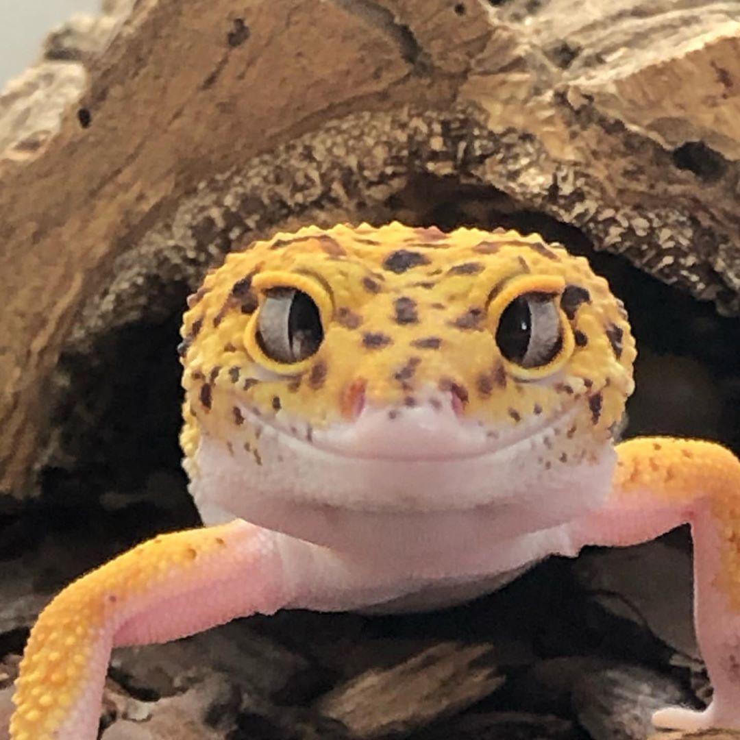 Nuesto gecko nos está saludando!!