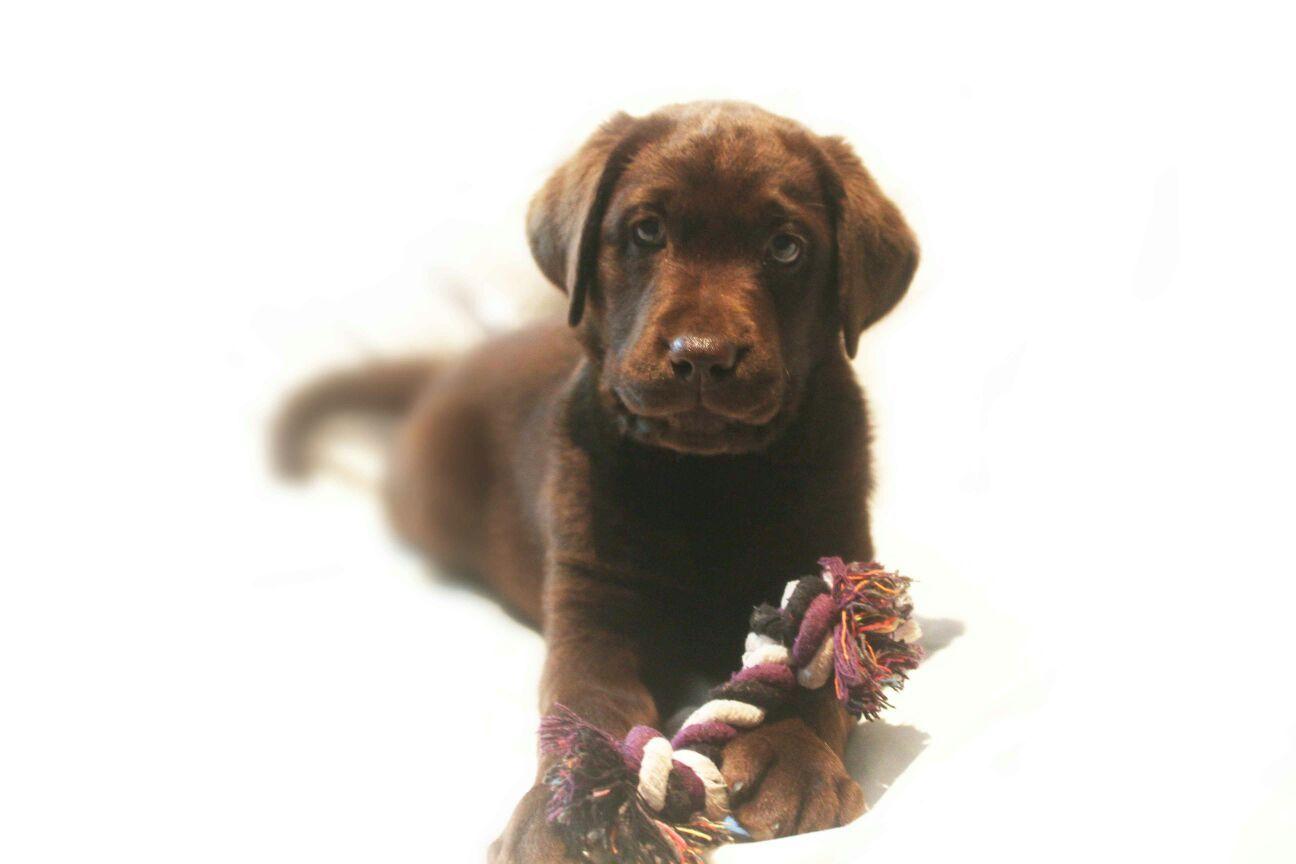 Sunday Pets,Tiempo de Profesionales, Royal Canin