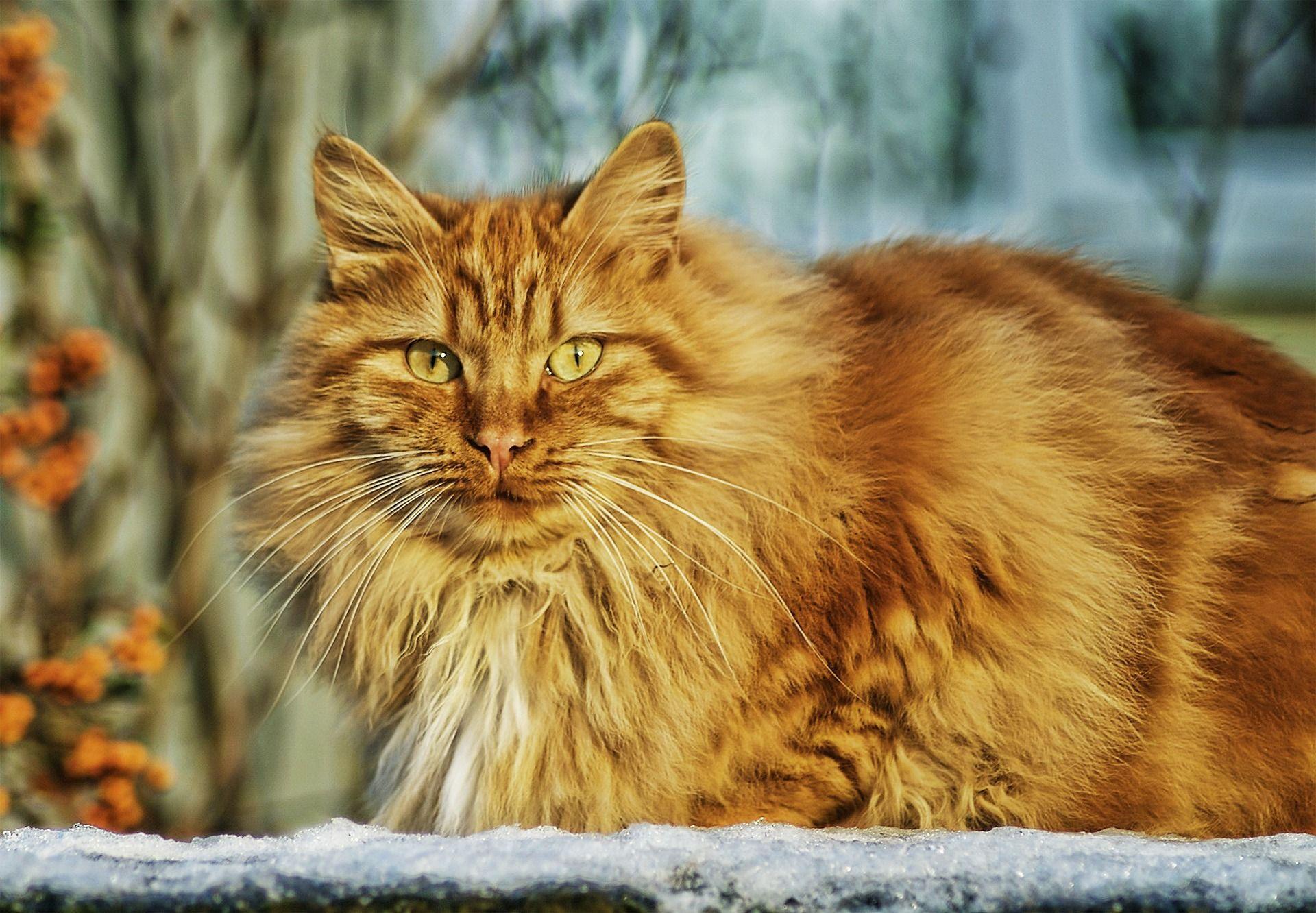 Taste of the Wild (USA),Tundra (Canadá), Sunday Pets, etc.