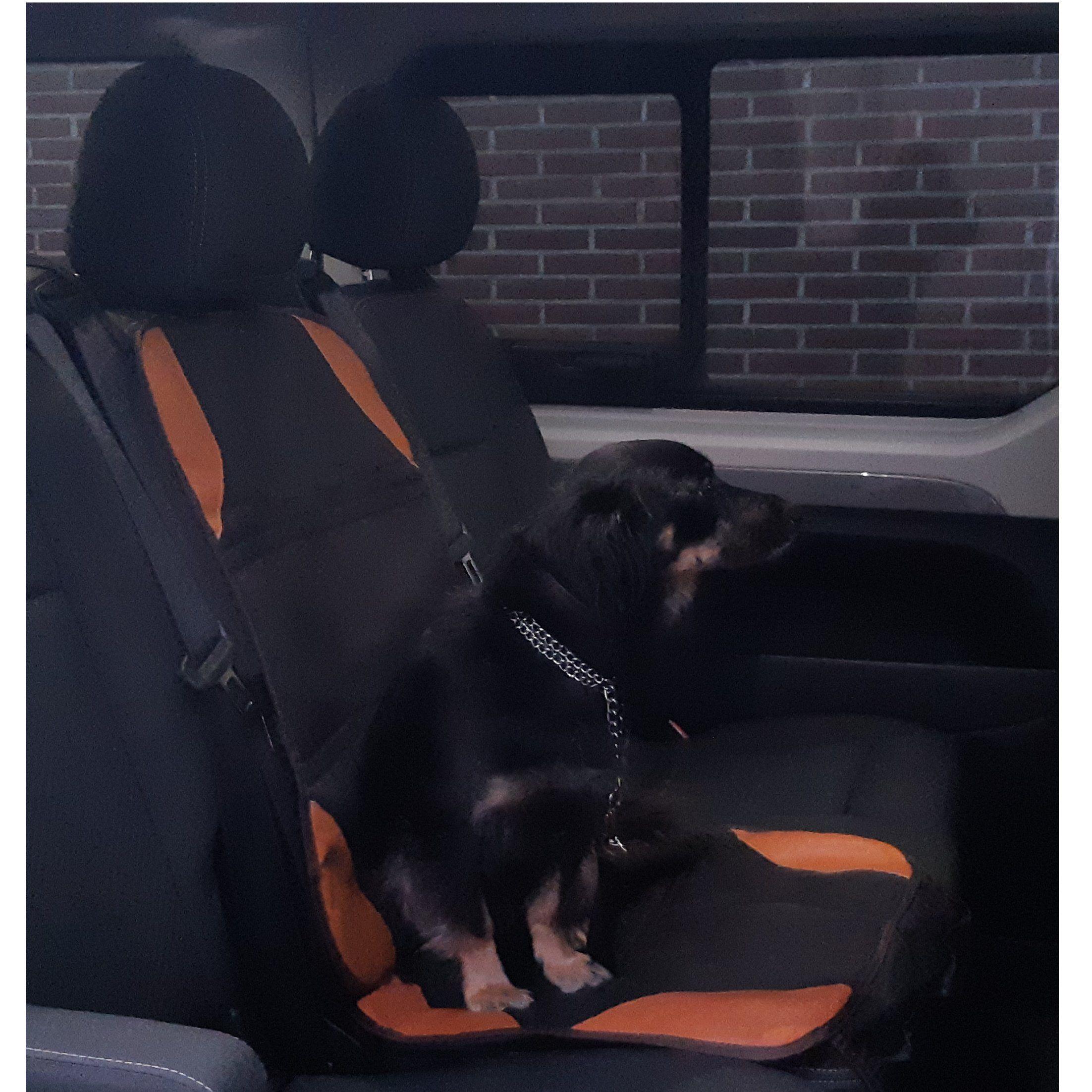 Transporte de perros: Servicios de Mascotas Entur