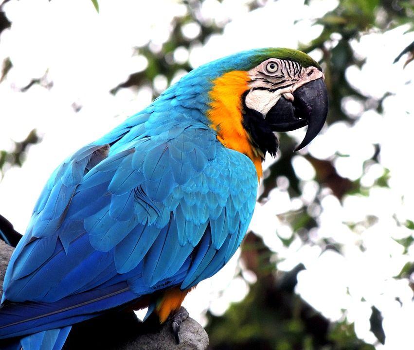 Transporte de aves, reptiles...: Servicios de Mascotas Entur