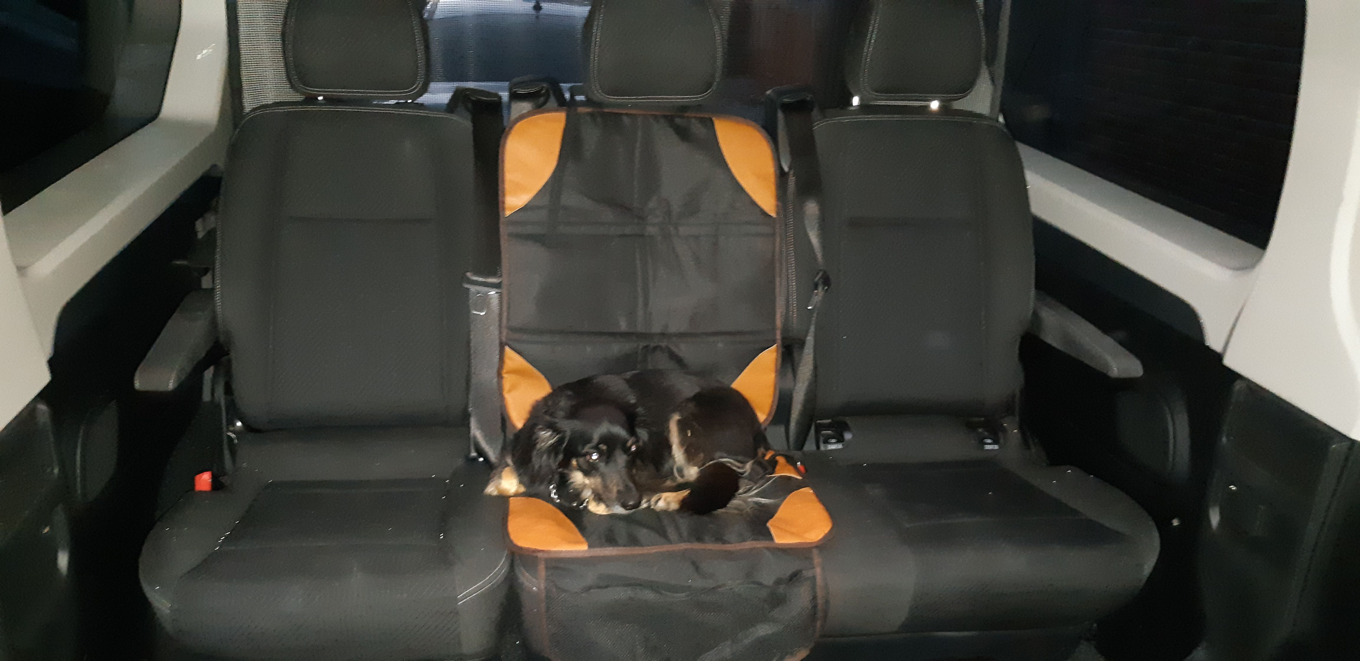 Empresa de transporte de mascotas en Alcalá de Henares
