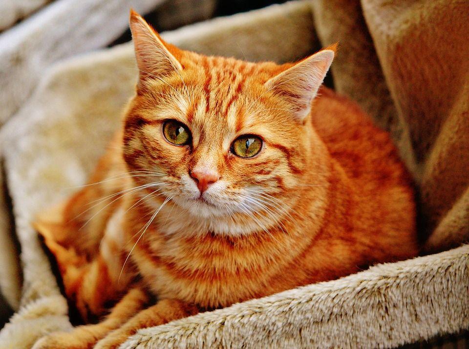 Transporte de gatos: Servicios de Mascotas Entur