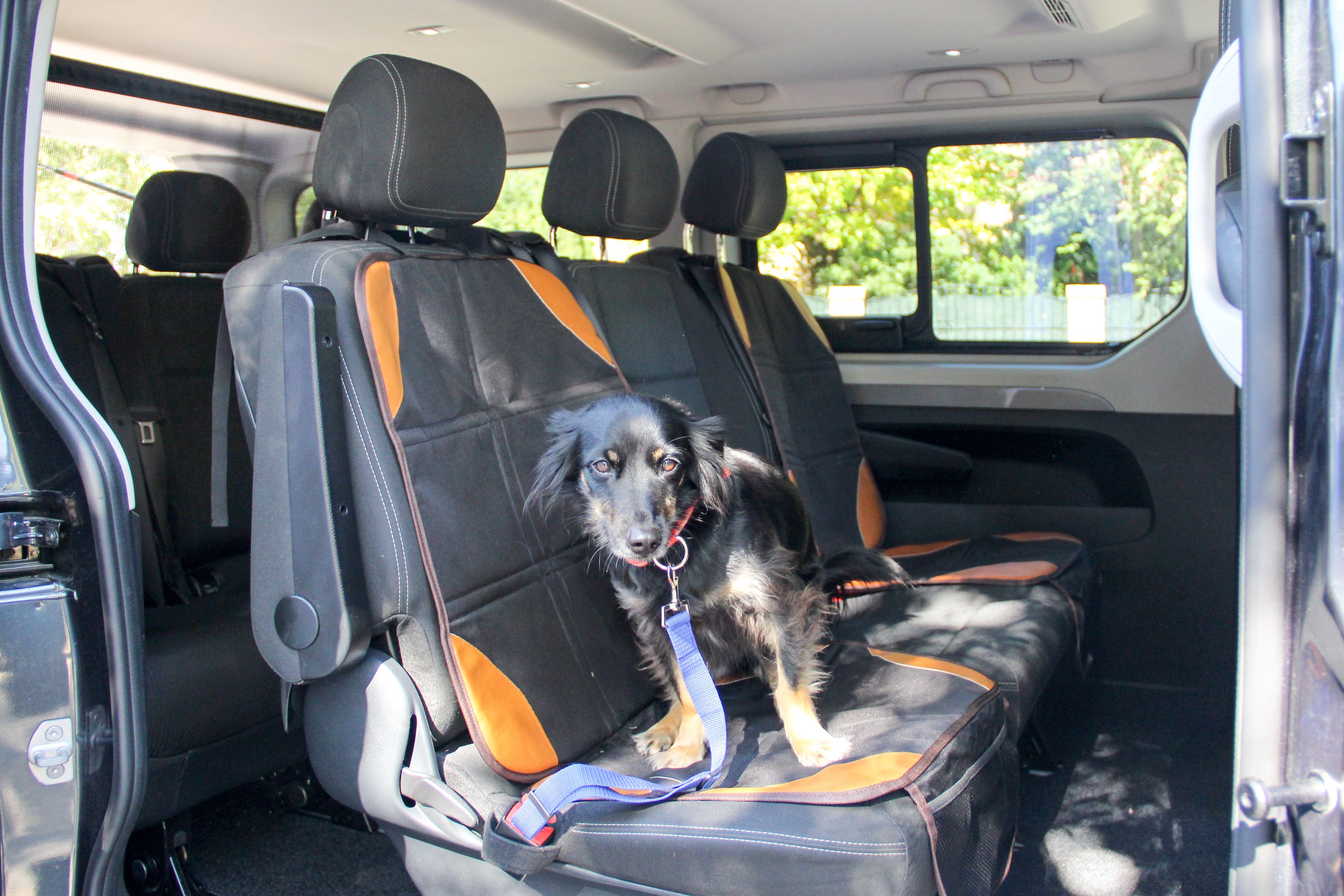 Perro en transporte Mascotas Entur