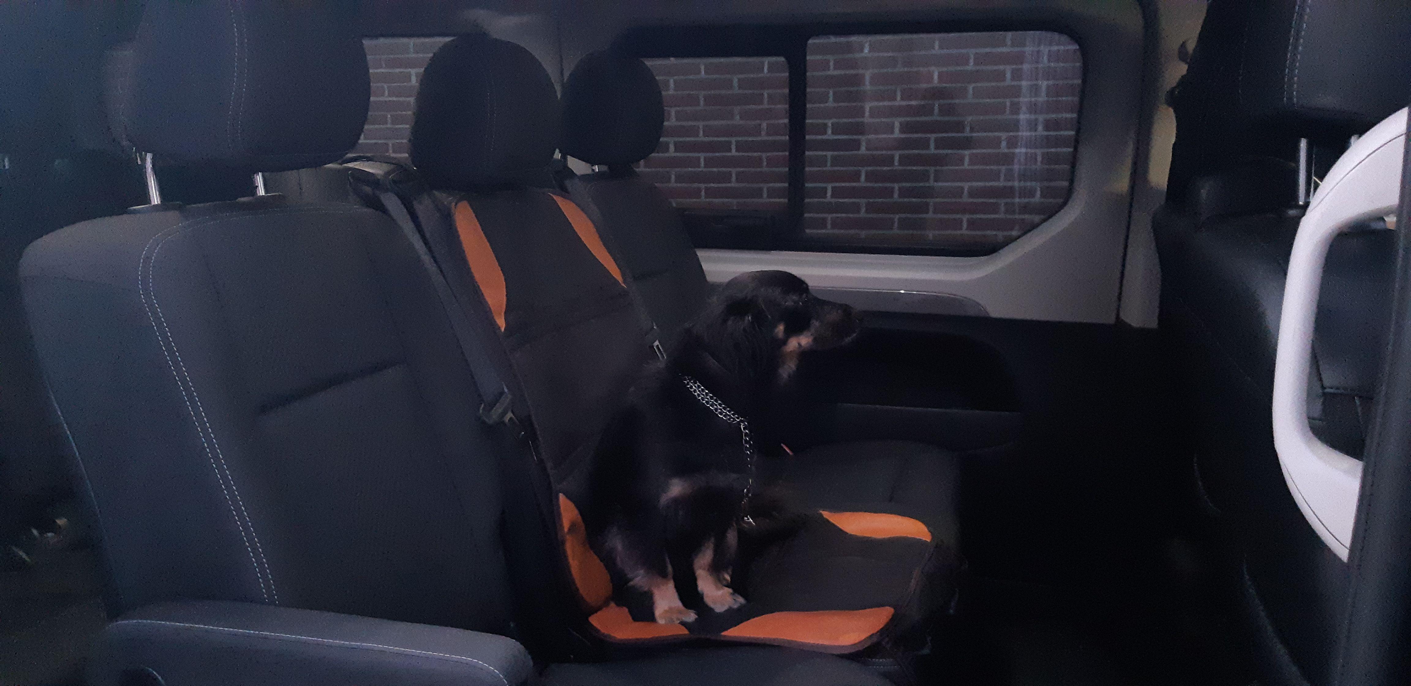Empresa de transporte de mascotas en Guadalajara