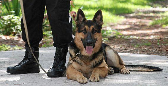 Vigilancia con perros adiestrados de seguridad: Todos nuestros servicios de Grupo Sancus