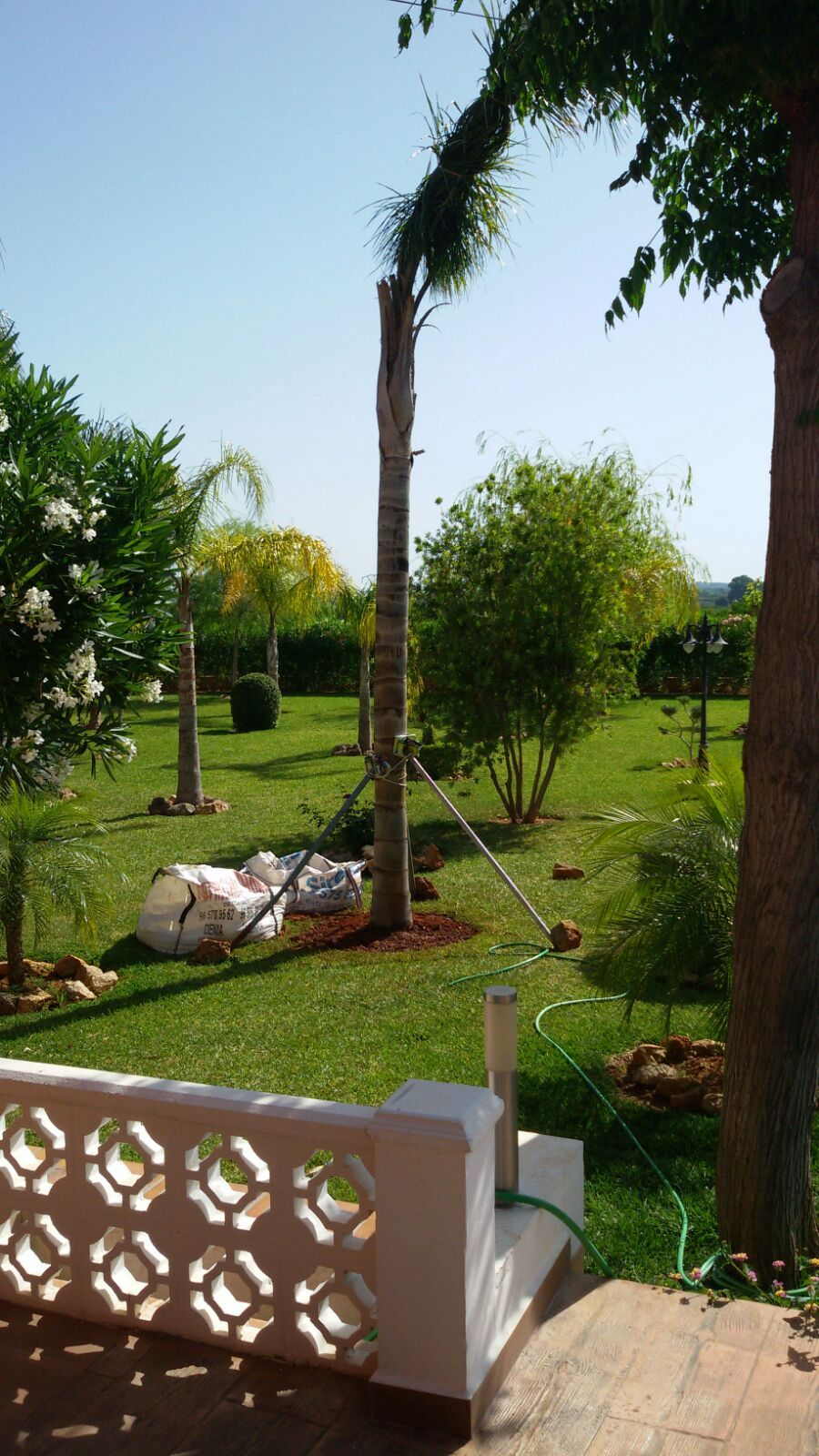 Maintenance of gardens and pools: Services de Multiservicios DyD