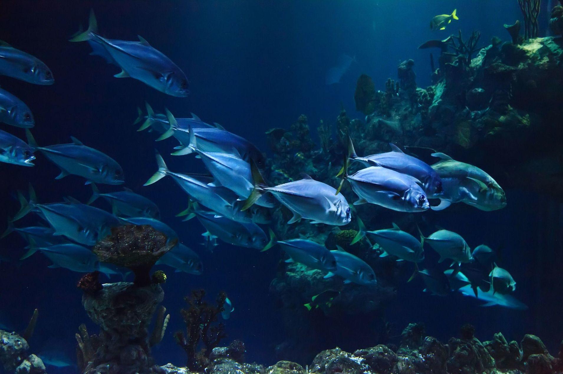 Vehículo de propulsión subacuática: Cursos y actividades de Scuba Plus