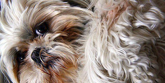 Charla: Lenguaje Corporal Canino