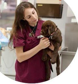 Curso de ayudante técnico veterinario en Bilbao