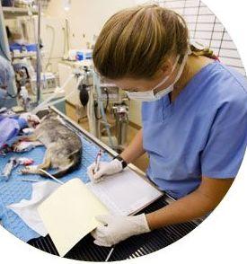 Curso de auxiliar de clínica veterinaria en Bilbao