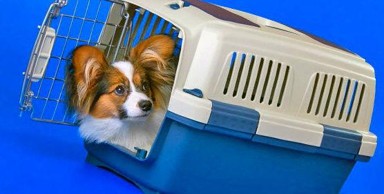 Charla: Educación Canina de un cachorro