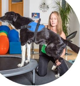 Curso de rehabilitación en pequeños animales en Bilbao