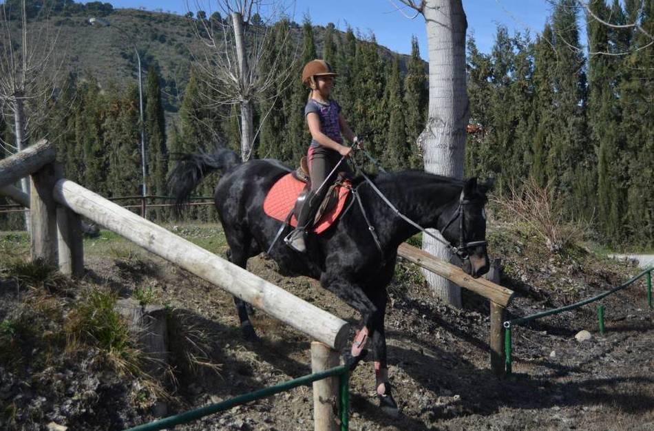 Foto 62 de Hípica y equitación en Cenes de la Vega | Club Hípico de Cenes