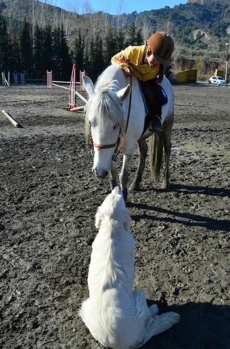 Foto 61 de Hípica y equitación en Cenes de la Vega | Club Hípico de Cenes