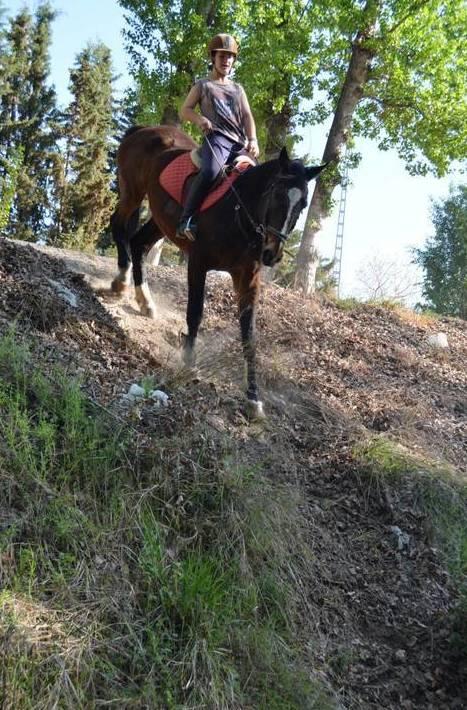 Foto 63 de Hípica y equitación en Cenes de la Vega | Club Hípico de Cenes