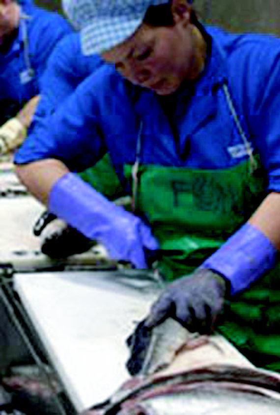 Foto 2 de Pescado (mayoristas) en Noia | Whitelink Seafood Limited