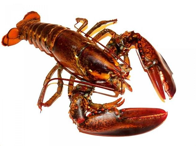 Mariscos: Productos de Whitelink Seafood Limited
