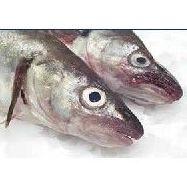Peces de cultivo: Productos de Whitelink Seafood Limited