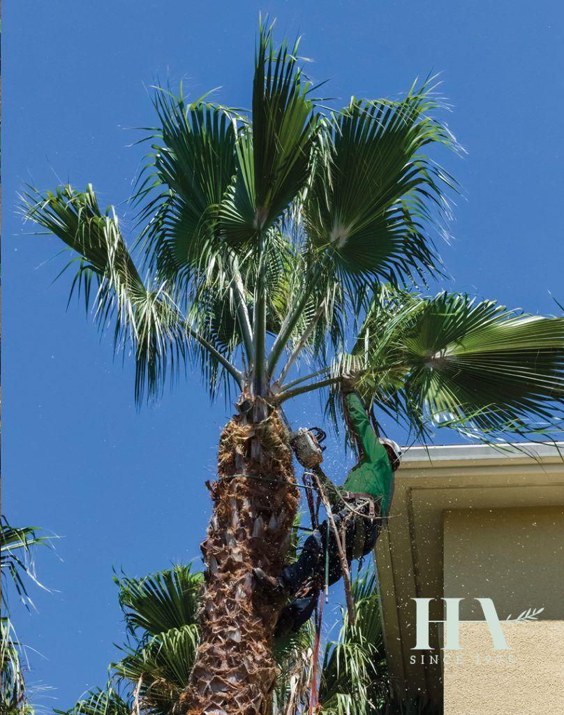 Arboricultura: Productos y servicios de Dispool / Jardinería Herrera