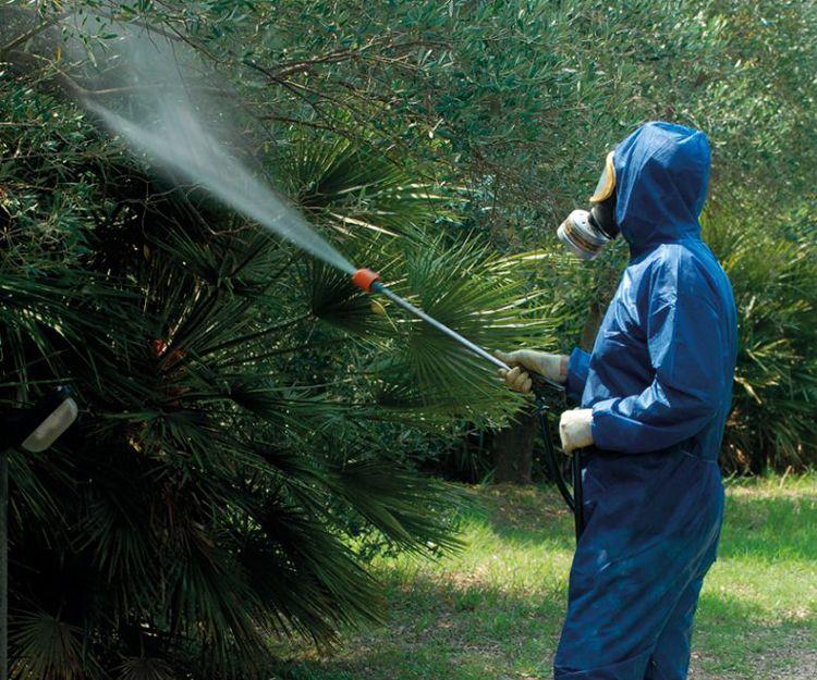 Servicios fitosanitarios para tu jardín