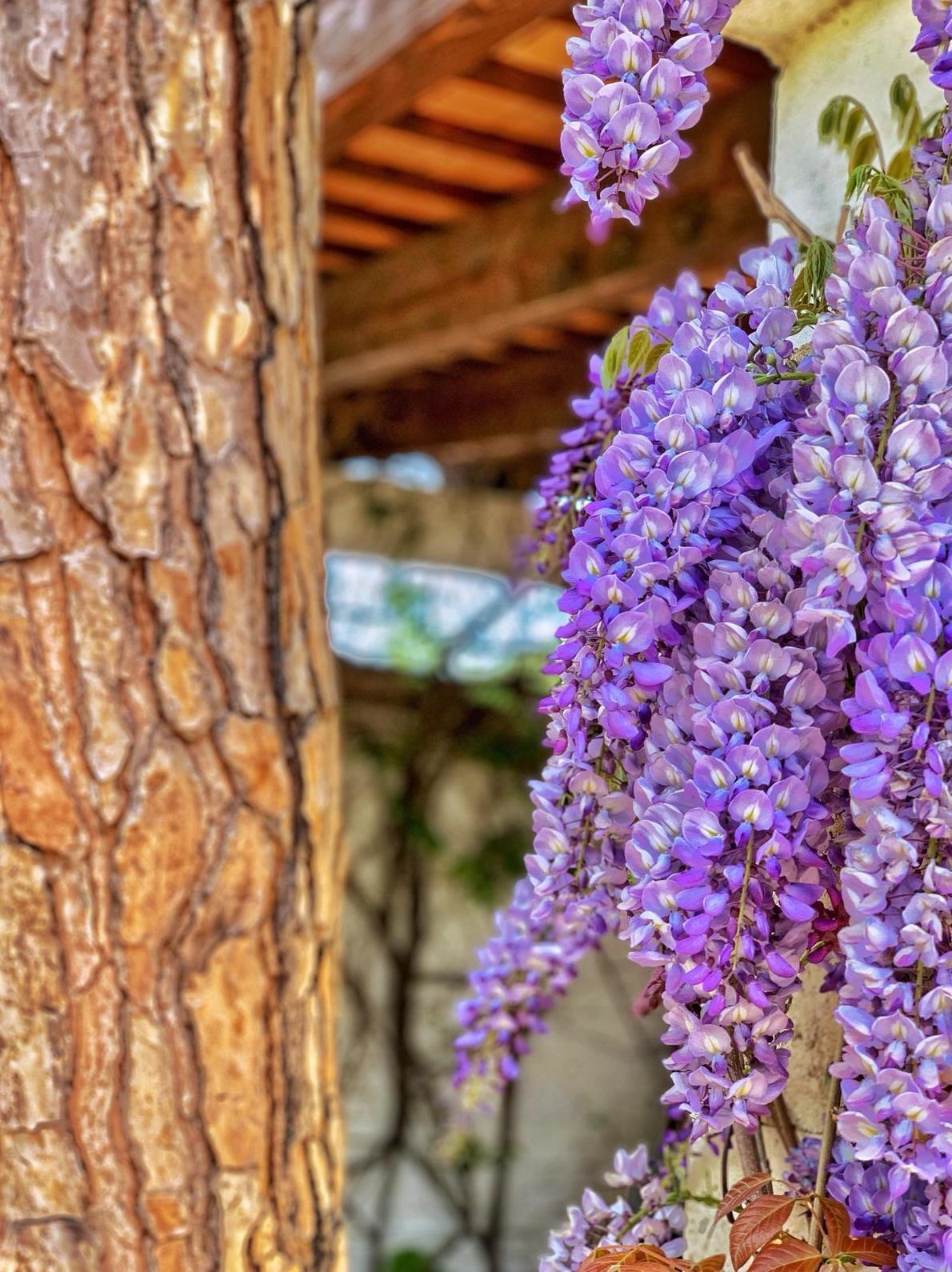 Foto 1 de Diseño y mantenimiento de jardines en Sant Feliu de Guíxols | Món Verd / Mundo Verde / Green World
