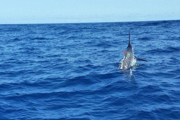 Avistamientiento de cetáceos