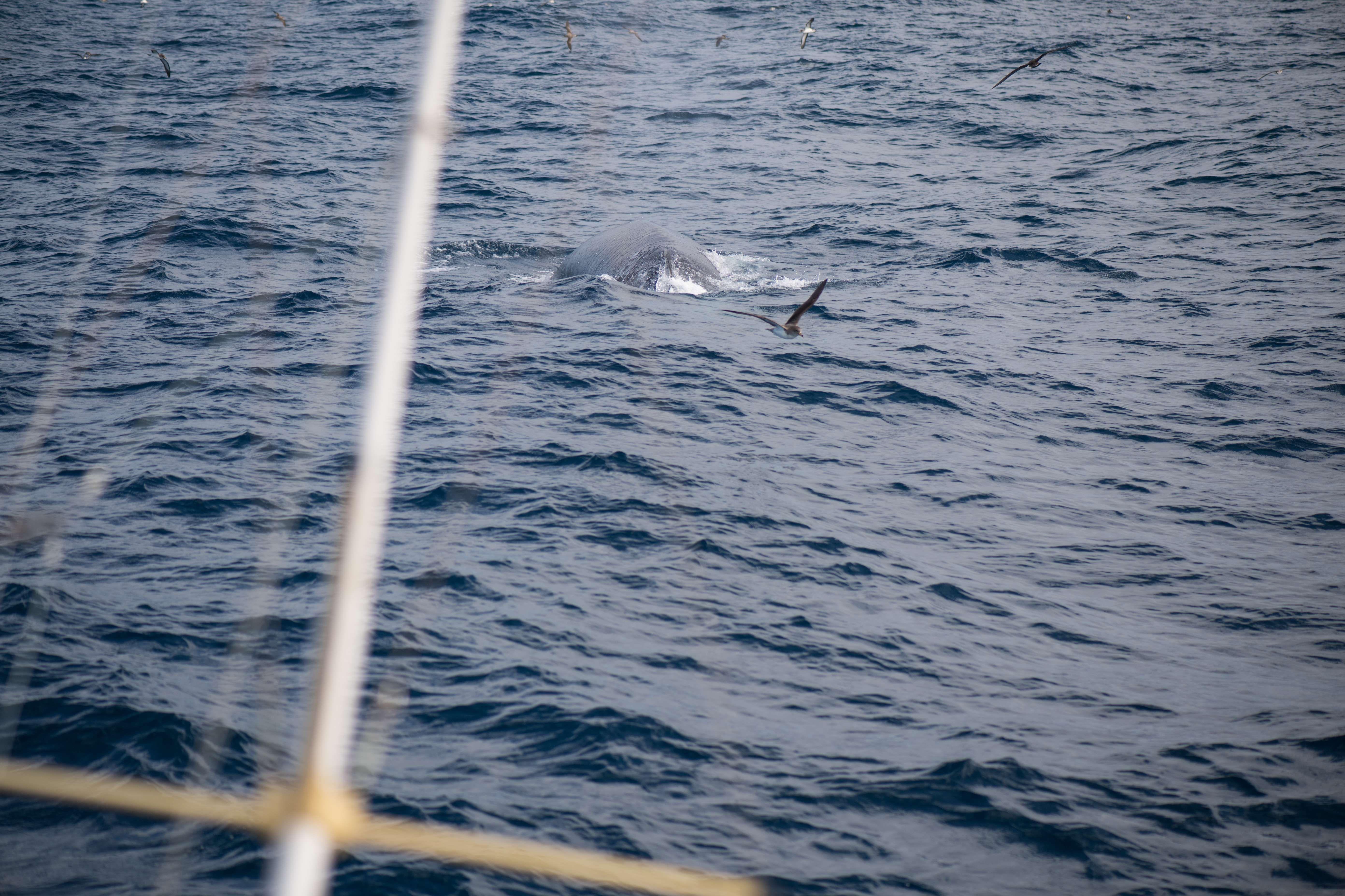 Avistamiento de ballenas en Las Palmas