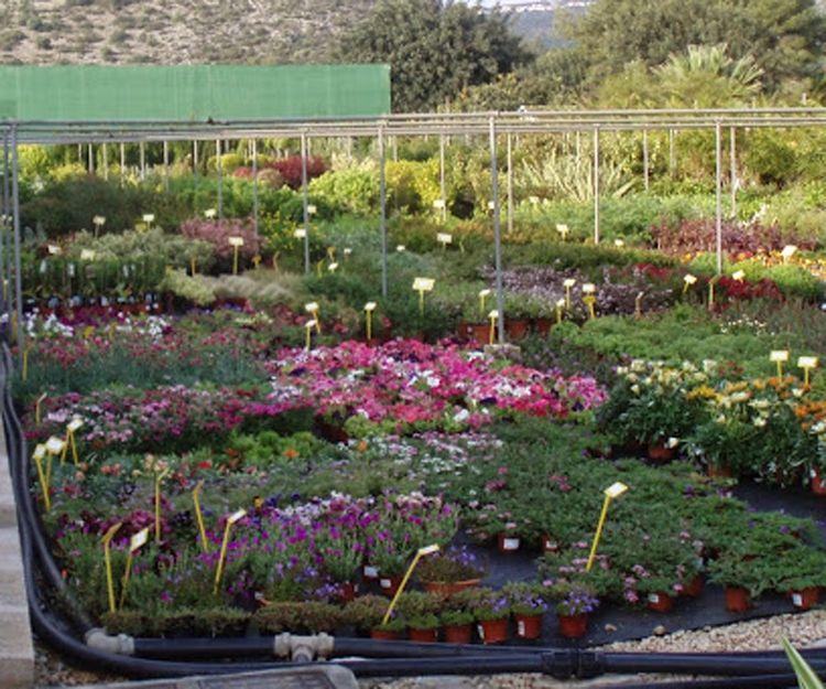 Centro de jardinería en Alicante
