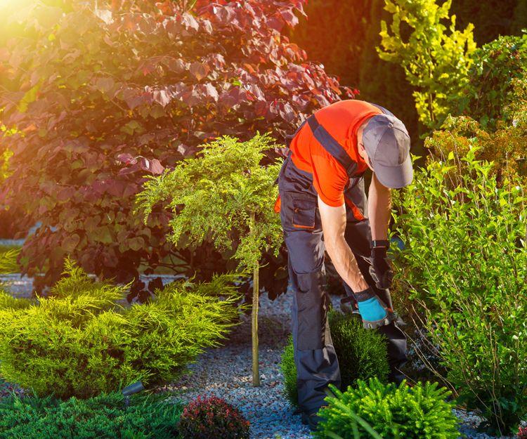 Servicio de mantenimiento de jardinería en Alicante