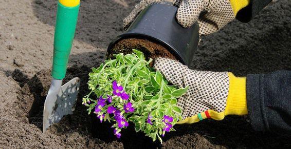 Mantenimiento de jardines: Servicios de Ayamanda
