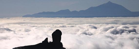 Fumigaciones Canarias