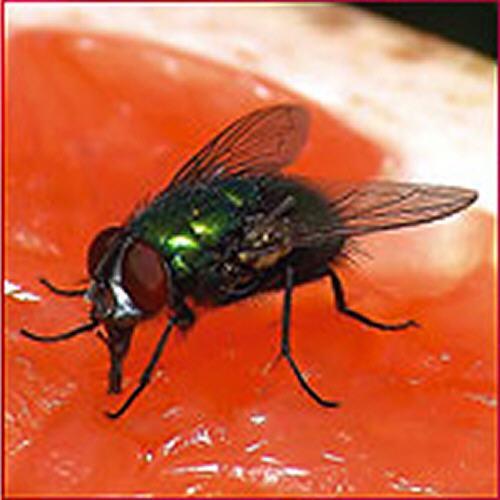 Control de insectos voladores, moscas, moquitos