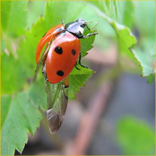 Tratamientos fitosanitarios, sanidad vegetal