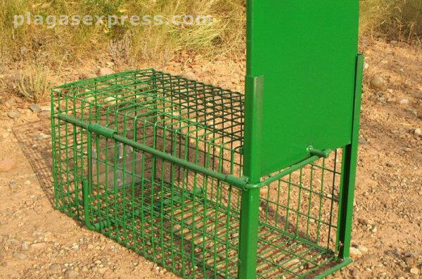 Jaula trampa para conejos selectiva