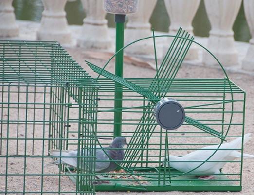 Trampa captura multiple de palomas