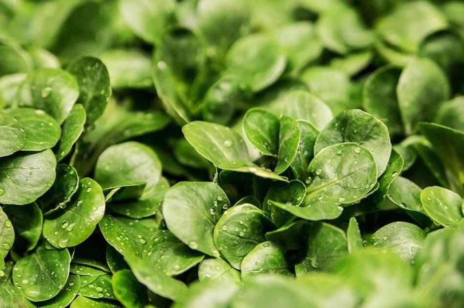 Verduras y hortalizas: Productos de Frutas Pablos