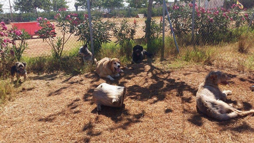 Residencia para perros en Alzira