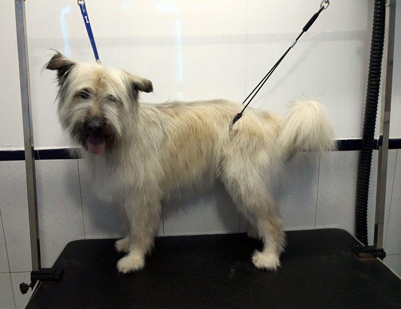 Cursos de peluquería canina en La Alcudia