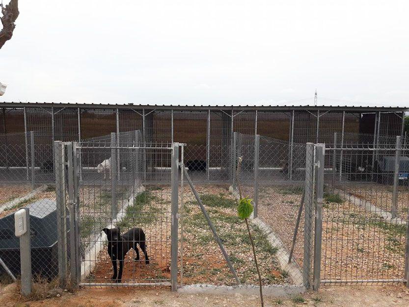 Residencias caninas en Valencia
